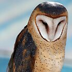portrait of a barn owl 2 by RichImage