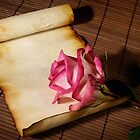 Pink rose and a parchment by ArtNudePhotos