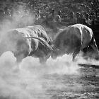 La corrida I by Igor Motl