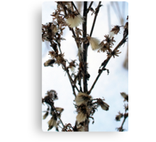 Wild flower in winter Canvas Print