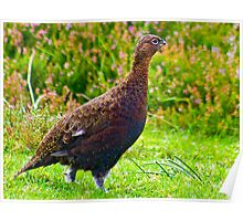 The Grouse Poster