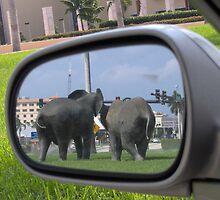 Rearview Mirror by Alejandro Cuadra