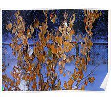 Golden Leaves on An Apple Tree in Jan, Poster
