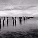 Old Jetty - Black and White 01 by Anthony and Kelly Rae