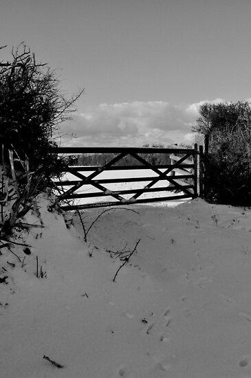 Winter scene 1 by imageworld