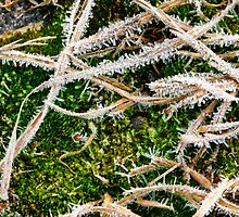 Tiny Ice Crystals on Green Moss by Götz Christof Glaser