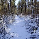 winter path by brucemlong