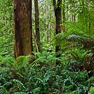 Gum & Ferns by Matt  Streatfeild