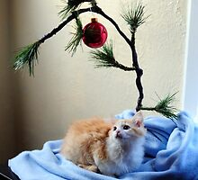 Christmas Kitty by Erik Holladay