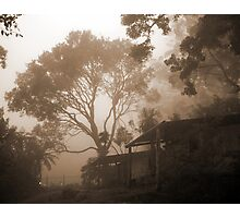 Misty Binna Burra Photographic Print