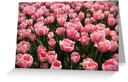 Tulips of Istanbul-TURKEY by rasim1