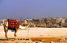 A Camel in Cairo by Paige