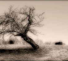 Old Apple Tree by George's Photography