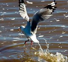 Touch down and take off by Rodney Wratten