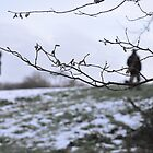 walk the fileds of snow and branches by Charlie Pallett
