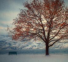 Winter in Peachland 2 by Tara  Turner