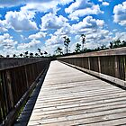 Long Nature Boardwalk by robert cabrera