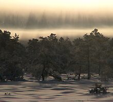 9.1.2010: Under the New Winter Day by Petri Volanen