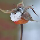 Rosehip in snow by loz788