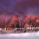 """"""" Iced Pink """" by canonman99"""