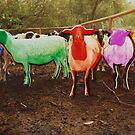 Rainbow Sheep by Rob  Holcomb