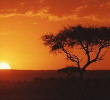 Safari Sunset by Lisa Baumeler