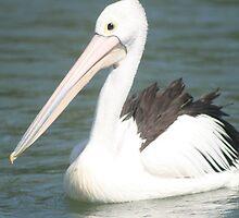 He is one proud pelican by footprints