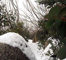 Mount Buffalo  by Cheryl Parkes