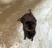 Bat by Cheryl Parkes