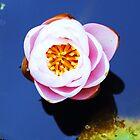 Inner lily by startori