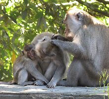 Bali - Monkey Business by soulimages