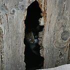 cat in the door by Kent Tisher