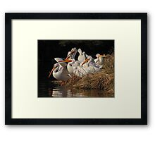 A Squadron of Pelicans Framed Print