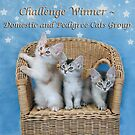 Banner Pedigree and Domestic Cats by sarahnewton
