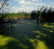 Green marsh by VladyWorld