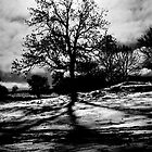 Winter Tree, Derbyshire by edfcole