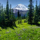 Trail to Dewey Lake - Mt. Rainier Natl. Park by Mark Heller