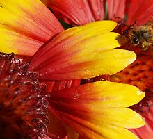 Bee at work by Sue Wright