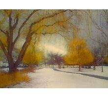 Skaha Path in Winter Photographic Print