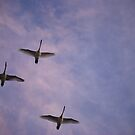 Flight of the Swans  by Michelle BarlondSmith