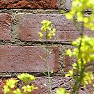 Wall and Flower by MuscularTeeth