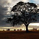 Silhouette at Dusk by Katherine Williams
