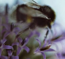 Bussy bee by Lena Weiss