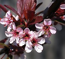 Light Pink Blossoms 2 by art2plunder