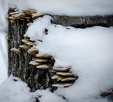 Snow, Fungii and a Stump by RonSparks