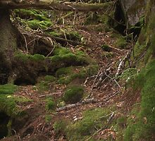 Mossy Path by betsy8897