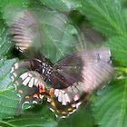 Flight Of A Butterfly by mark4321