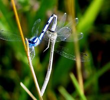 Damselfly by art2plunder