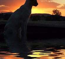 Sunset Feline by SharonD