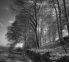 Along Platt Hill Lane - B&W by Tom Gomez